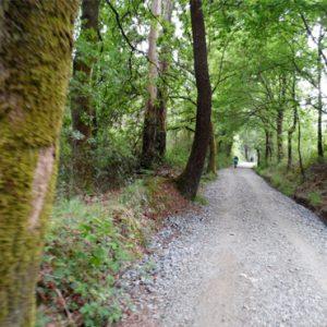 A-Peroxa-bosque