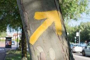 flechas amarillas camino de santiago