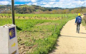 Camino de Santiago desde Ourense