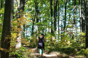 camino otoño